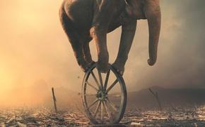 Картинка слон, колесо, арт
