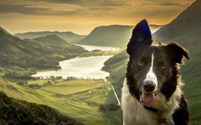 Картинка морда, горы, природа, озеро, собака, долина, панорама, Бордер-колли