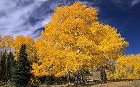 Картинка осень, пейзаж, дерево