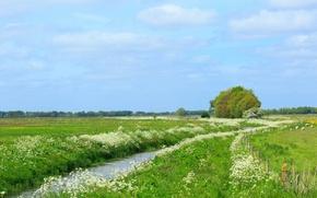 Картинка деревья, ручей, луг, Нидерланды, Голландия, Aa en Hunze, Drenthe