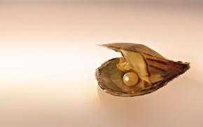 Картинка ракушка, жемчужина, Моллюск