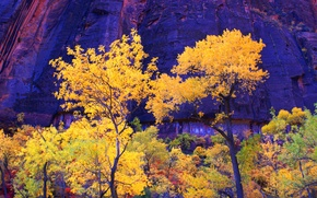 Картинка осень, деревья, горы, скалы, Юта, США, zion national park