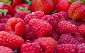Обои ягоды, макро, клубника, малина