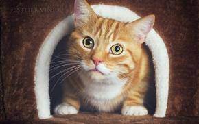 Картинка кот, рыжий, домик