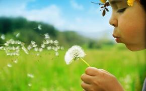 Обои лето, зеленый, девочка, Одуванчик