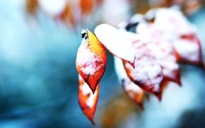 Картинка осень, листья, снег