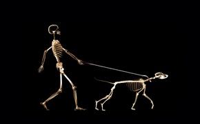 Картинка человек, собака, поводок, рентген