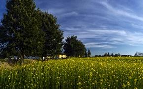 Обои небо, поле, лето, деревья, рапс, облака