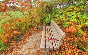Картинка осень, трава, листья, парк, кусты, скамья