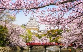Обои мост, пагода, цветение, весна, сакура, река, Япония