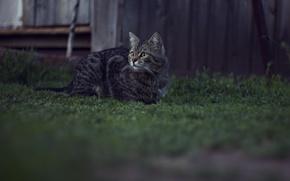 Картинка лето, кошки, природа, вечер