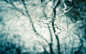 Обои дерево, ветка, снег, природа, почки, весна