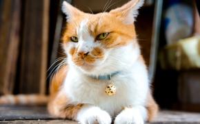 Картинка кот, усы, взгляд, симпотяга