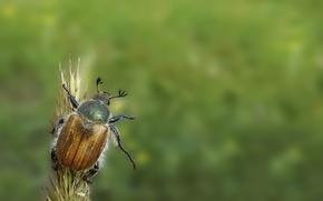 Обои зеленый, жук, минимализм, привет