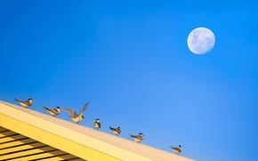Картинка крыша, небо, птицы, луна