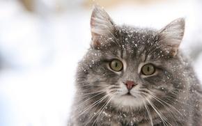 Обои зима, кошка, снежинки, обои