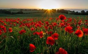 Картинка поле, лучи, закат, цветы, холмы, маки, вечер, луг