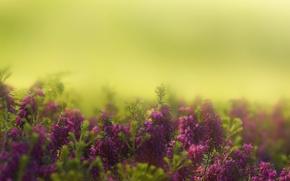 Картинка flowers, garden, bokeh