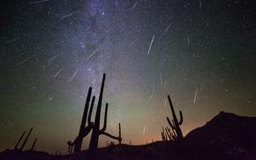 Картинка ночь, космос, звезды, кактусы