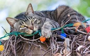 Картинка кот, ветки, гирлянда, лампочки