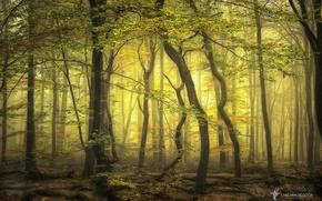 Картинка лес, деревья, ветки, туман, Нидерланды, Lars van de Goor