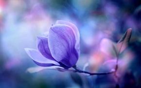 Картинка цветок, макро, природа, фон, обои, растение, wallpaper, магнолия
