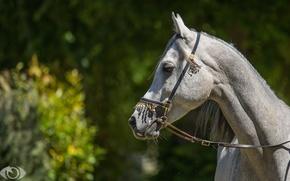 Картинка морда, солнце, свет, серый, конь, лошадь, профиль, (с) OliverSeitz