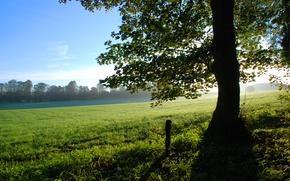 Обои лето, дерево, поляна, Природа, солнечный свет