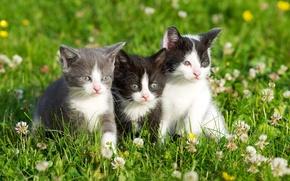 Картинка цветы, котята, grass, травка, flowers, kittens