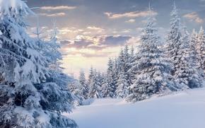 Картинка зима, лес, облака, снег, ёлки