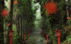 Обои фонари, деревья, осень, листва, дорожка