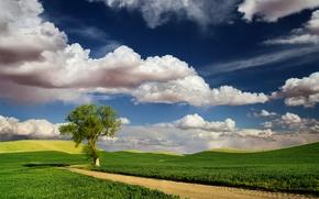 Картинка дорога, небо, облака, природа, дерево, поля, весна
