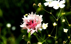 Картинка цветок, макро, насекомые, Лето