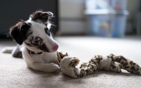 Картинка дом, собака, щенок