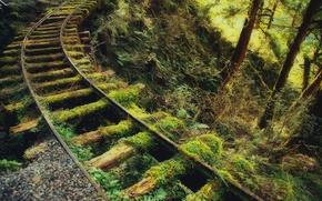 Картинка дорога, зелень, лес, заросли, рельсы, мох, железная, шпалы, старая