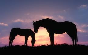 Картинка трава, облака, закат, кони, арт, силуэты, жеребёнок