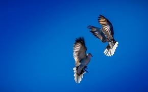 Обои небо, птицы, танец
