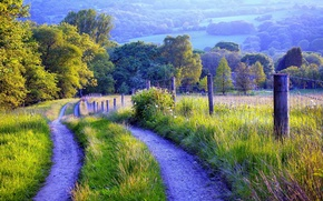 Картинка дорога, трава, деревья, природа, ограда