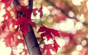 Картинка осень, листья, макро, природа, дерево, ветка, боке, бордовые