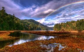 Обои радуга, облака, лес