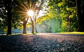 Картинка свет, деревья, дорога, солнце