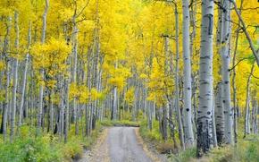 Картинка дорога, осень, лес, природа, берёзы