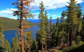 Картинка лес, вода, озеро, California, lake Tahoe