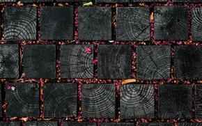 Картинка текстура, квадраты, лепестки, листочки, цветки, деревяшки