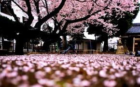 Картинка макро, деревья, фон, дерево, розовый, widescreen, обои, сакура, wallpaper, цветочки, широкоформатные, background, полноэкранные, HD wallpapers, …