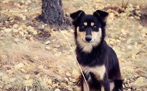 Картинка осень, трава, взгляд, листья, дерево, Собака, пес, собачка, дворняга
