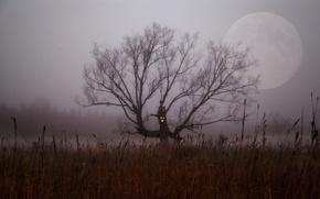 Картинка поле, ночь, туман, дерево, ветви, луна, куст, Хэллоуин