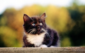 Обои кошка, кот, котенок, черный, киска, киса, cat, котэ