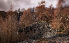 Обои лес, камни, ветер