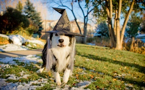 Картинка праздник, собака, шляпа